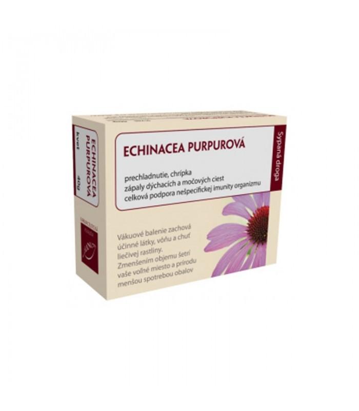 Echinacea purpurová (kvet)