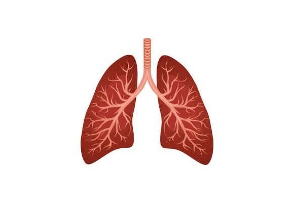 Pľúca riadia dýchanie, vytvárajú a obnovujú energiu
