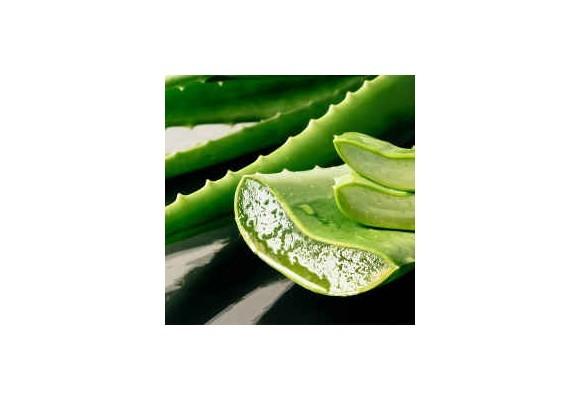 Liečivé šťavy - aloe vera šťava